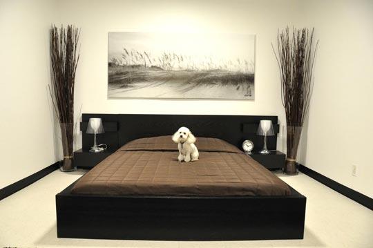 El hotel de las mascotas millonarias