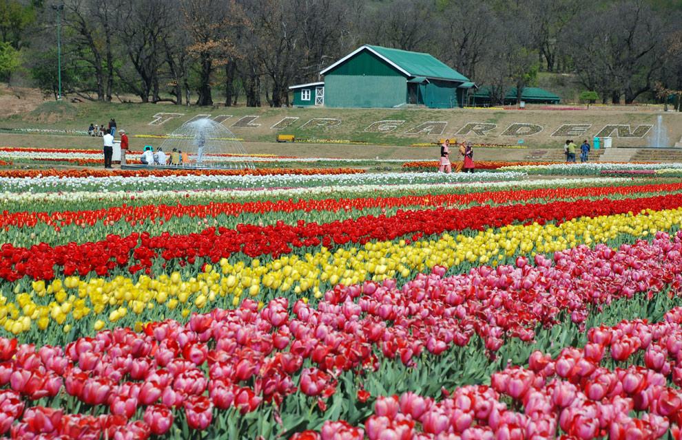 La primavera en fotos el hemisferio norte se llena de vivos colores foto 1 - Jardines de tulipanes en holanda ...
