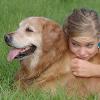 Diez consejos útiles para escoger a la mascota perfecta