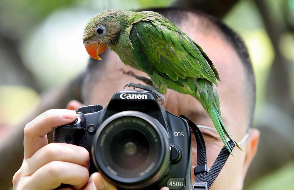 http://www.hola.com/imagenes/actualidad/2010070625765/animales/humanos/fotos/0-79-431/animales02-a.jpg