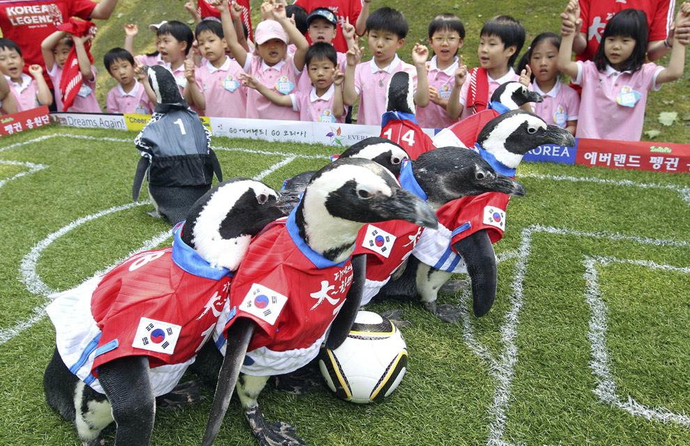 http://www.hola.com/imagenes/actualidad/2010070625765/animales/humanos/fotos/0-79-434/animales05-a.jpg