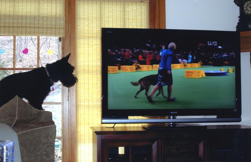 Un canal de televisión sólo para su perro