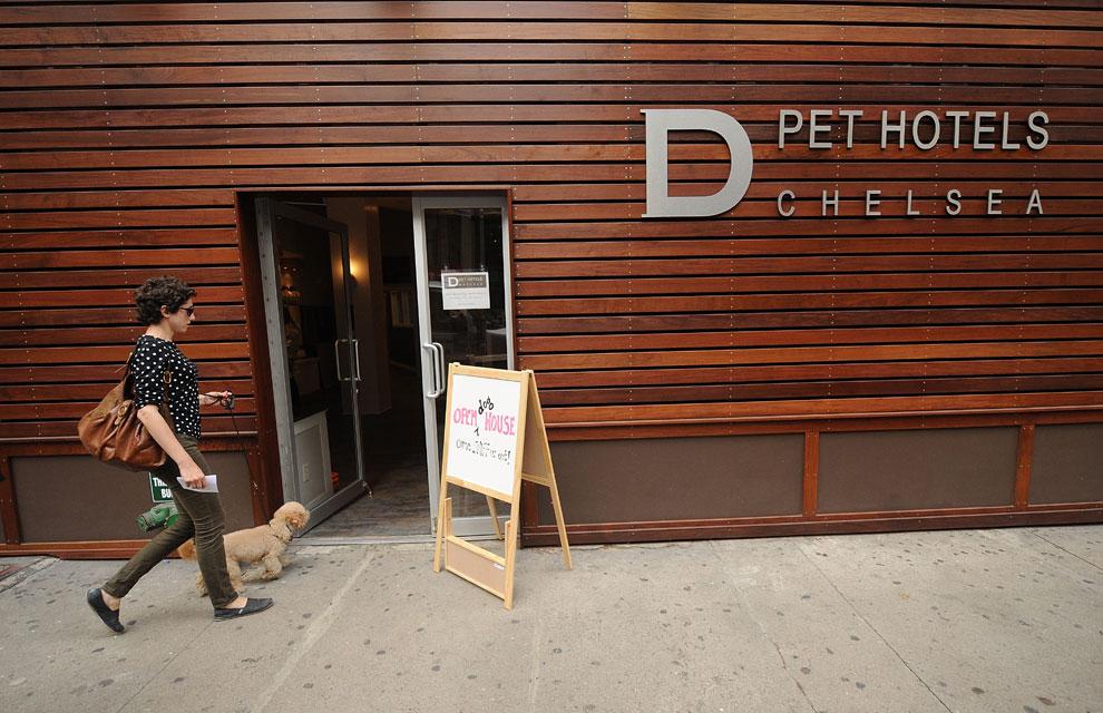 Un hotel de lujo para perros en Nueva York
