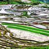 Los espectaculares campos de arroz de China