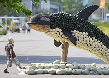 A estos animales marinos 'les dieron calabazas'