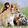 Una amistad puramente animal