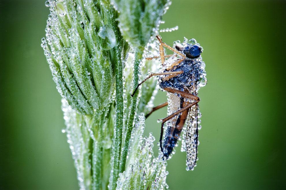 Parecen joyas, ¡pero son insectos reales!