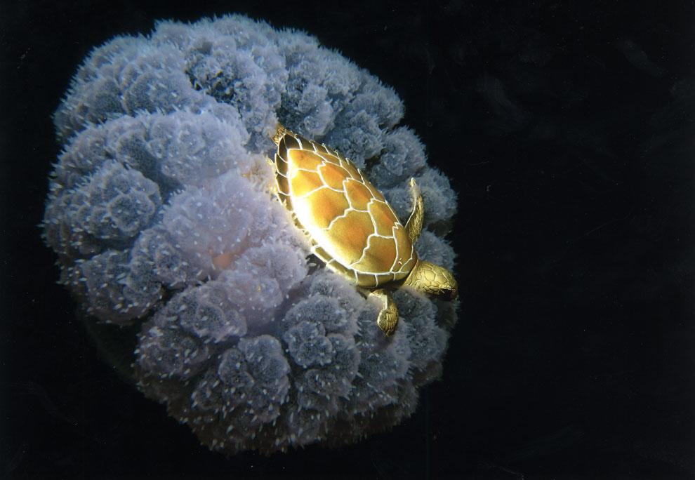 ¡Arre, medusa, arre!