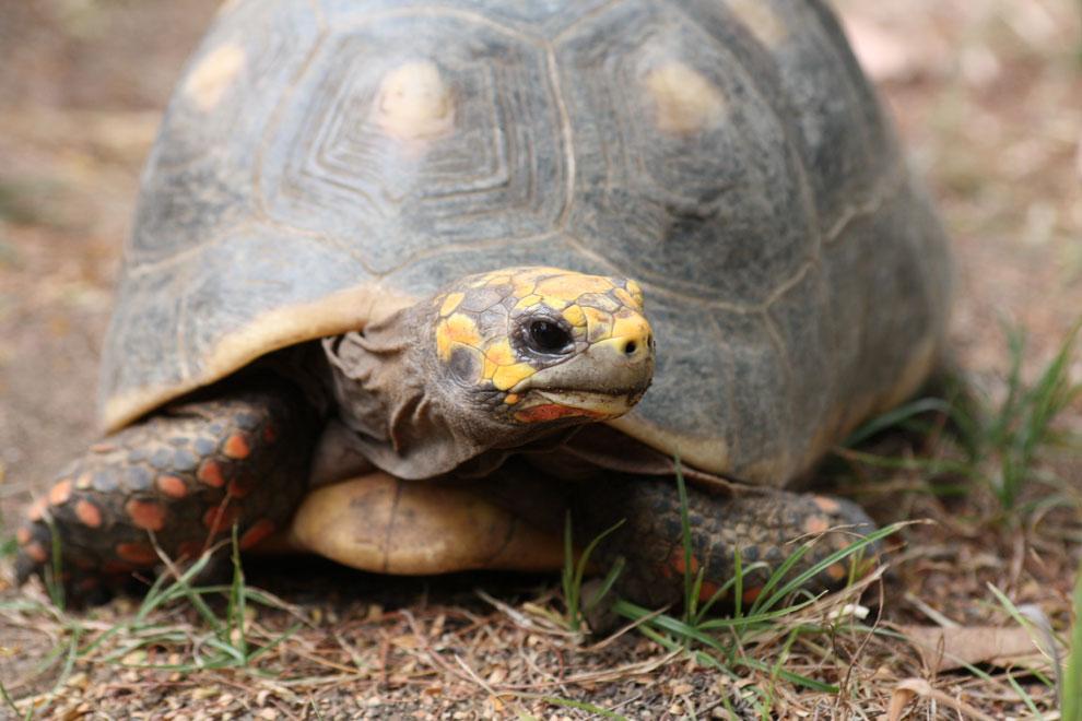 La tortuga perdida en 1982... ¡estaba en casa!