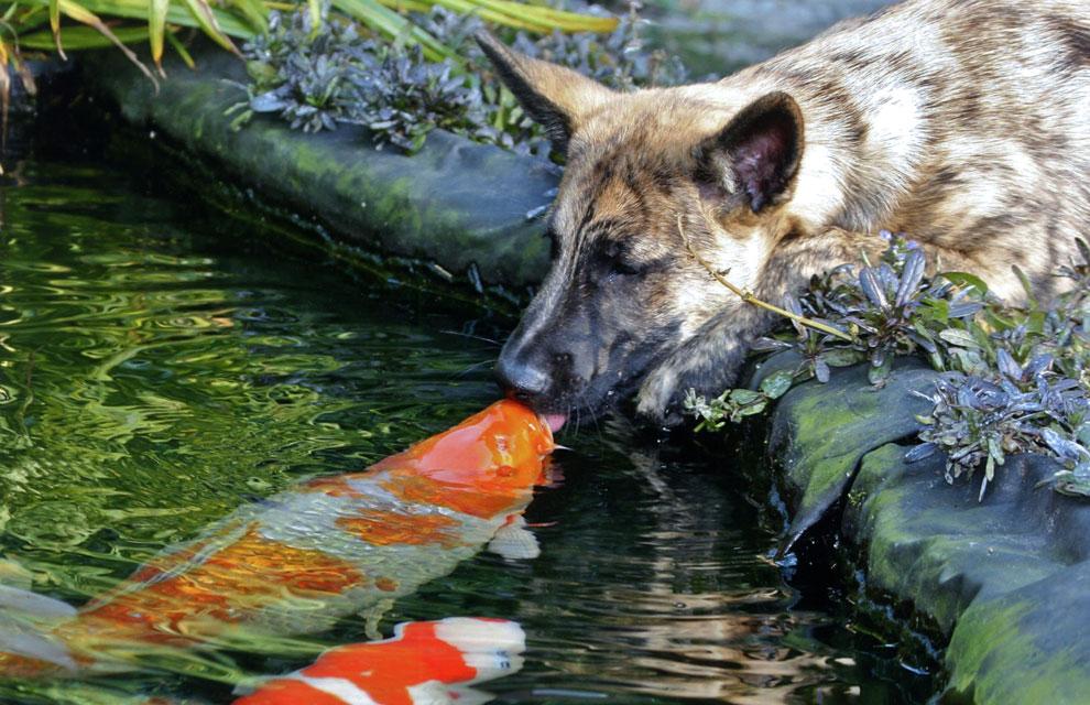 La extraordinaria amistad entre un perro y un pez
