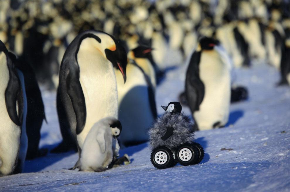 Este pingüino... ¡es un robot!