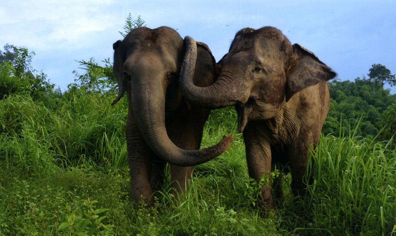 Las más tiernas y amorosas imágenes del mundo animal