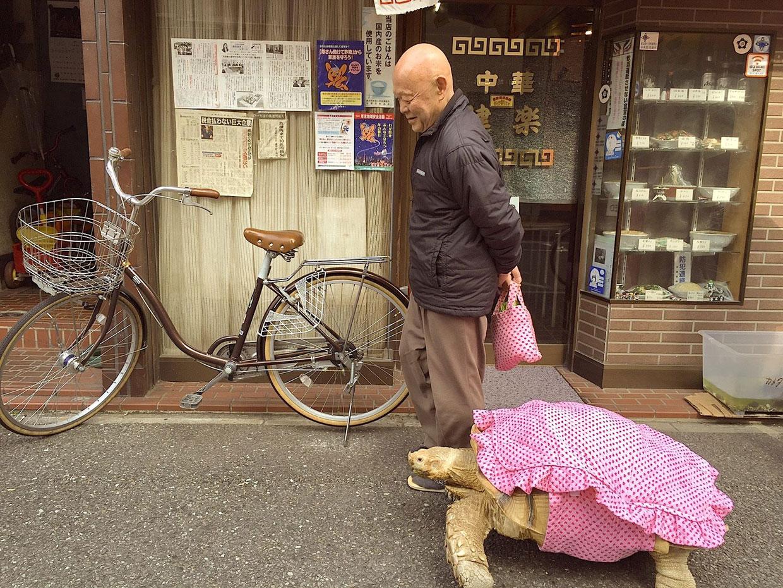 Sacando a pasear a la tortuga