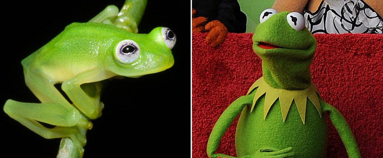 La rana Gustavo... ¡existe de verdad!