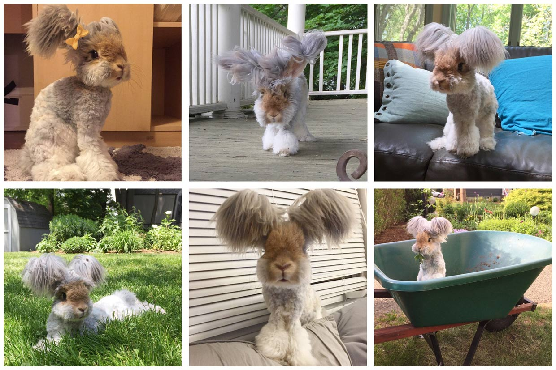 Un conejo triunfa en la red con sus vistosas orejas
