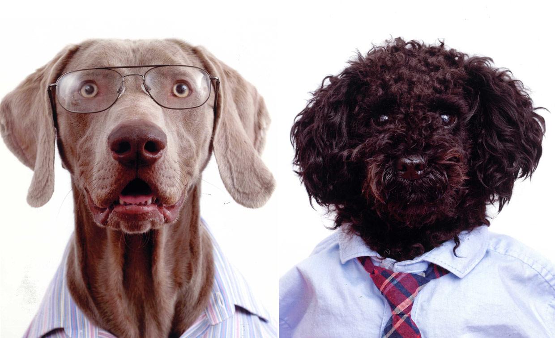 Cuando los perros parecen personas