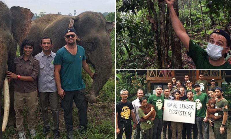 El viaje más intrépido de Leonardo DiCaprio entre orangutanes y elefantes