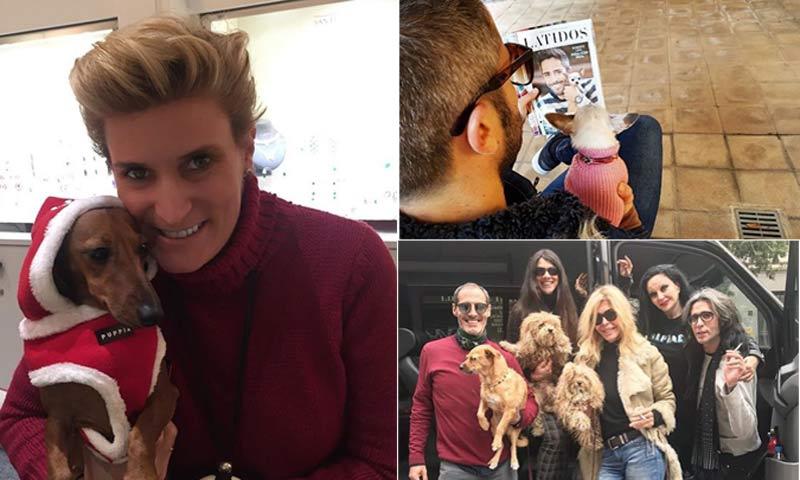 Las mascotas de las 'celebrities', las otras protagonistas de Instagram