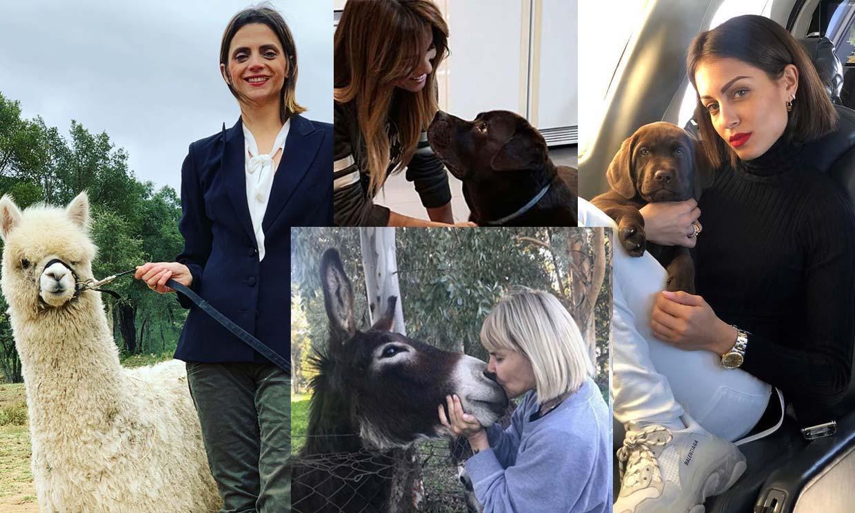 La peculiar mascota de Macarena Gómez y otras tan populares como sus dueños