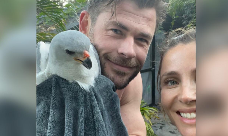 ¡Elsa Pataky y Chris Hemsworth al rescate! Así han liberado a un ave atrapada en su gallinero