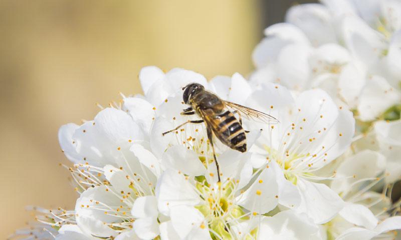 Veneno de abeja, el ingrediente cosmético de moda
