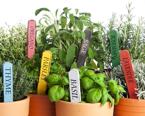 Deliciosas ideas para potenciar el sabor de tus platos for Asociacion de plantas aromaticas