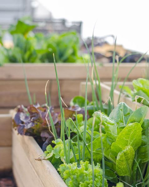 huertos-urbanos-hierbas-aromaticas-plantea