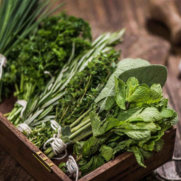Guía práctica para cultivar tus propias hierbas aromáticas