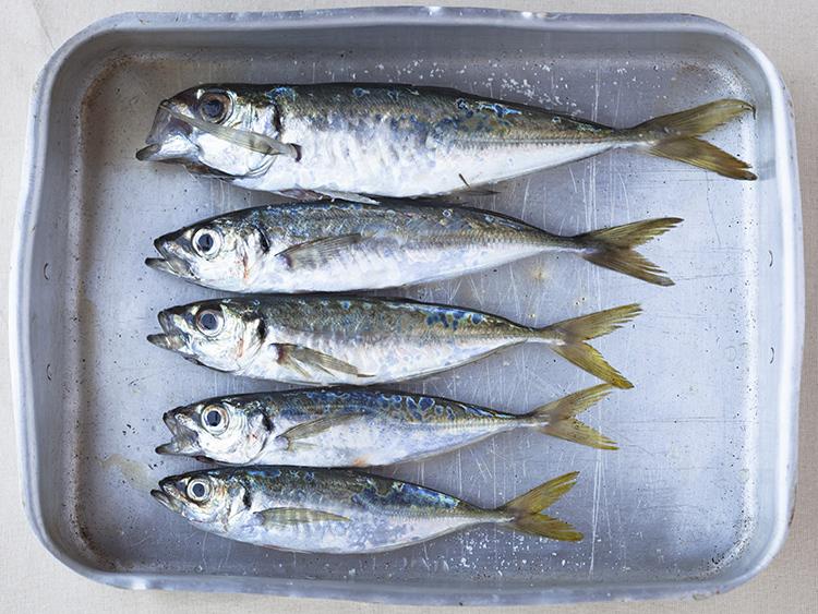 sardinas-xouvas-parrochas-01