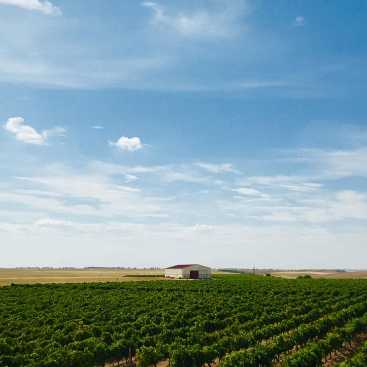 Te descubrimos los vinos de Rueda más versátiles a través de sus bodegas