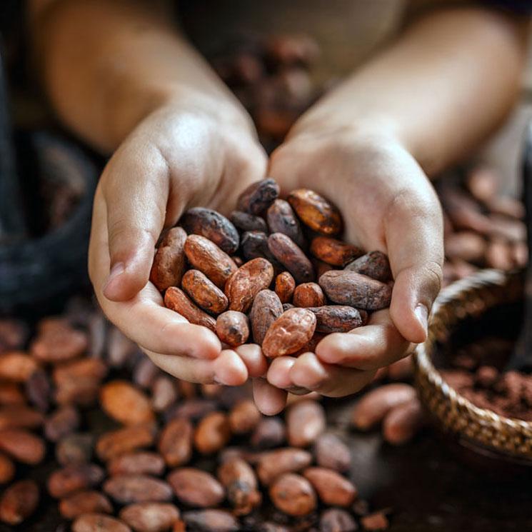 ¿Sabes cuál es el chocolate preferido de Oprah Winfrey?