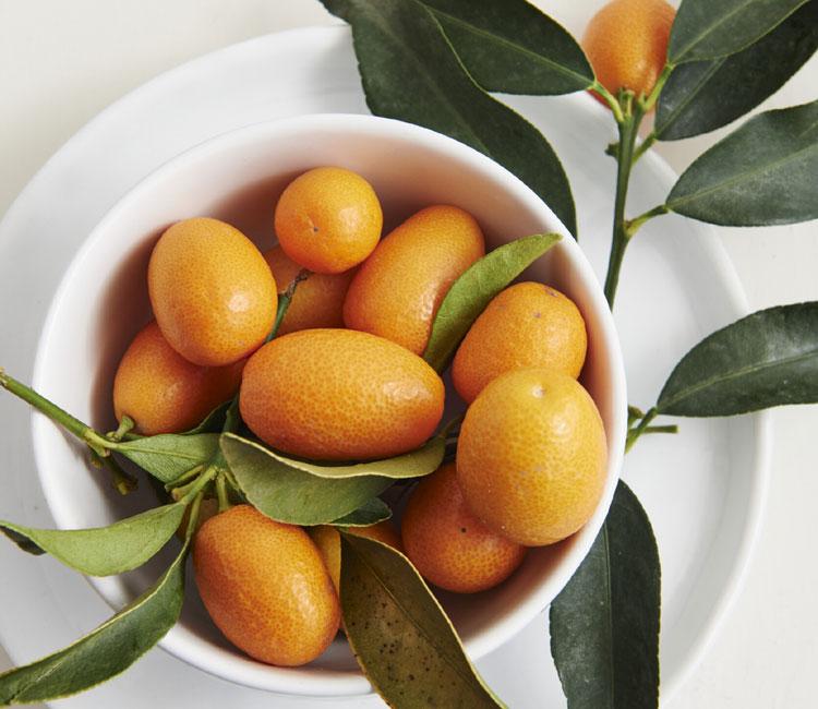 kumquat-age