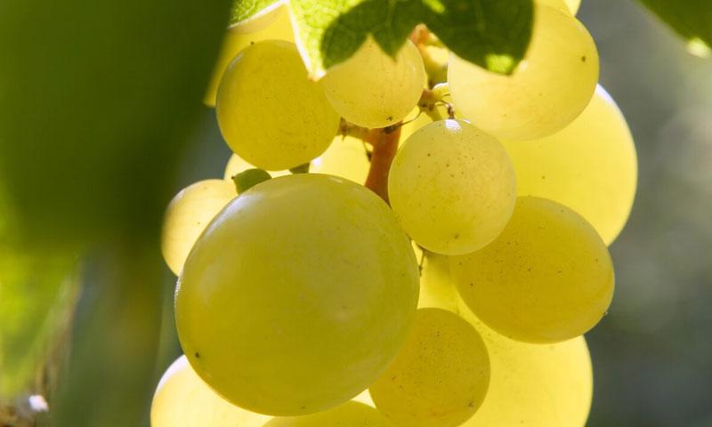 Recetas con uvas para la última noche del año