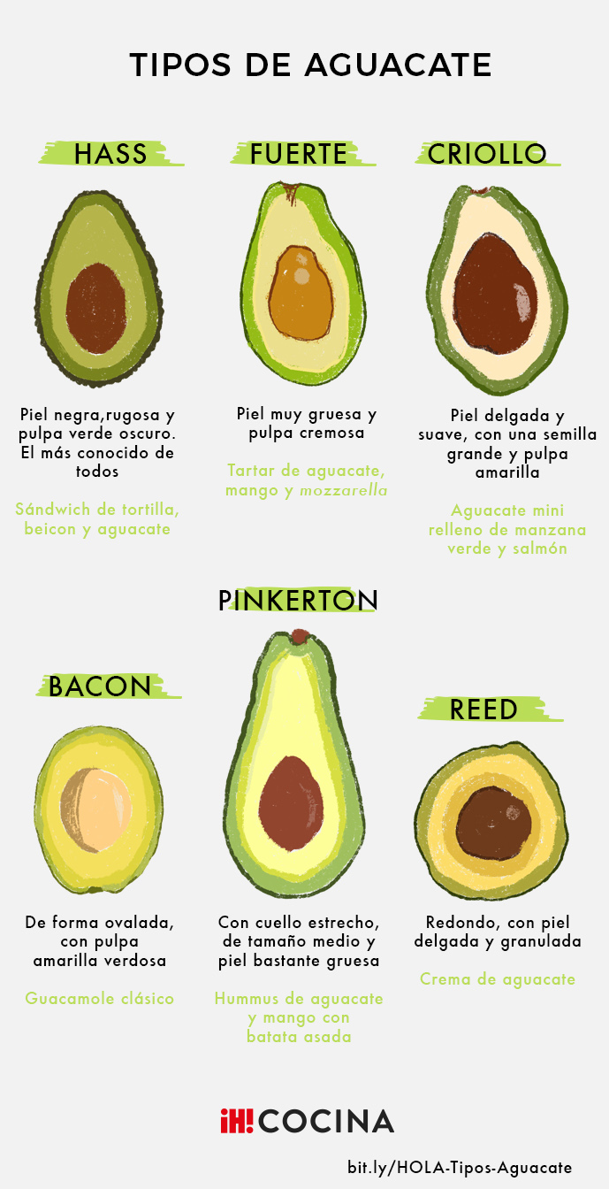 aguacates-tipos