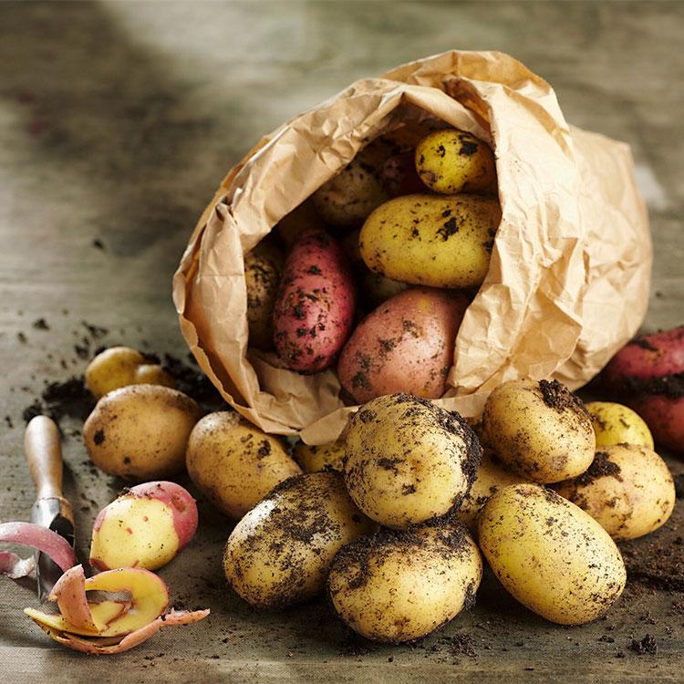 Distintos tipos de patata