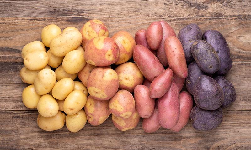 ¿Qué variedad de patata elijo?