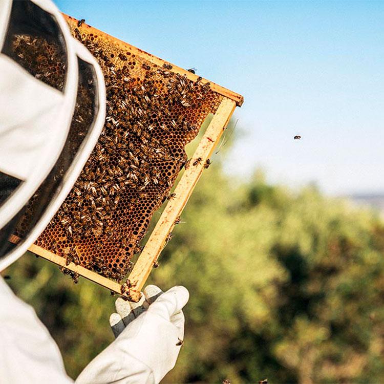 apicultor-abeja