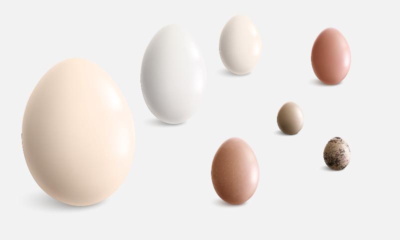 El más consumido es el de gallina, ¿pero sabes cuáles son los otros huevos más populares?