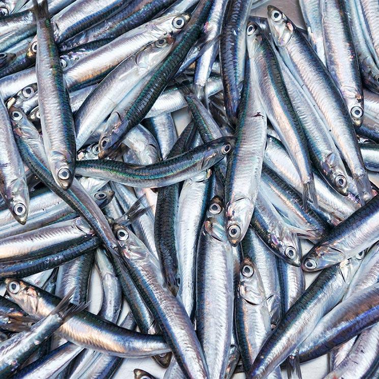 ¿Sabes en qué se diferencian la anchoa, el boquerón y el bocarte? Te lo contamos todo