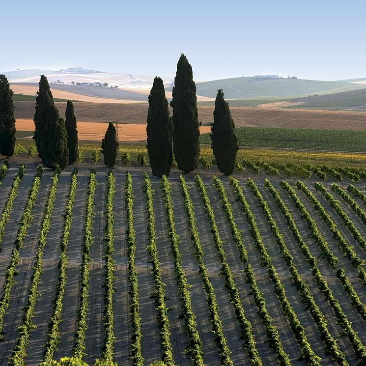 Descubre la magia de los vinos de Jerez