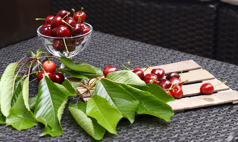 'Amigas' de la línea, diuréticas, antioxidantes… diez razones para incluir las cerezas en la dieta