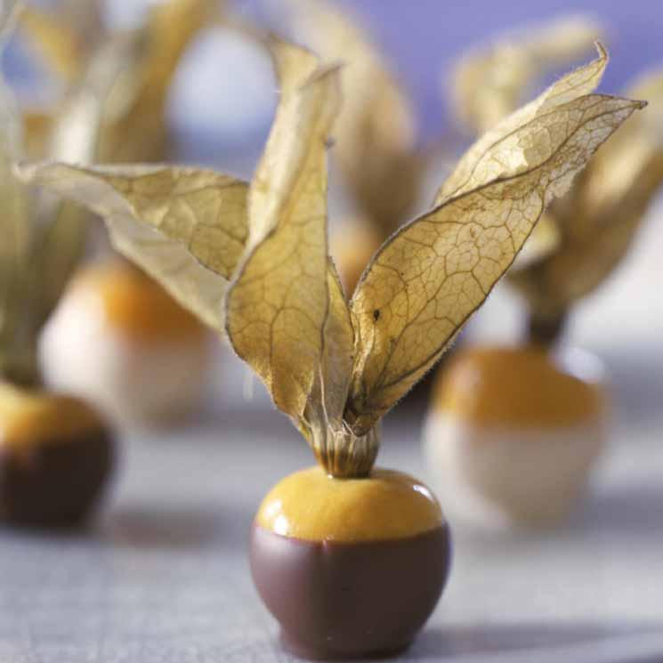 Physalis recubiertos de chocolate