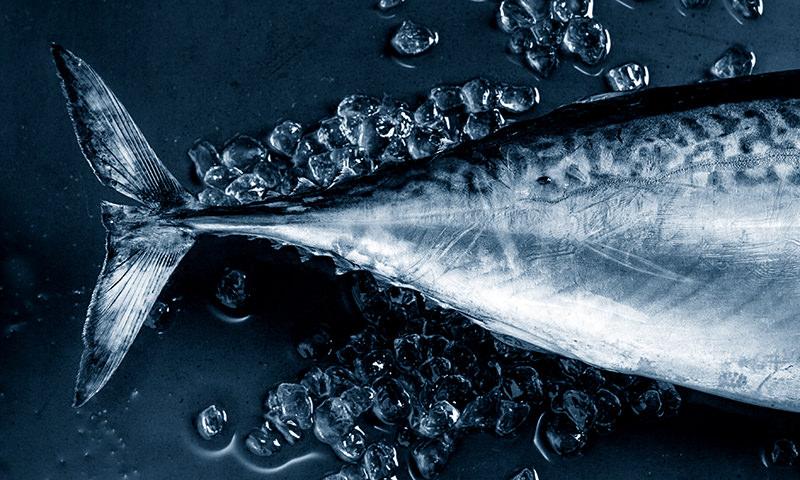 ¿Te apasiona el atún rojo? Aquí tienes consejos, trucos y recetas para sacarle el máximo partido