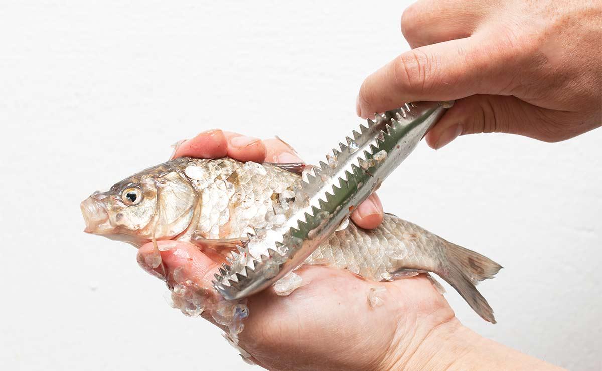 ¿Sabes limpiar correctamente el pescado? Te enseñamos cómo hacerlo paso a paso