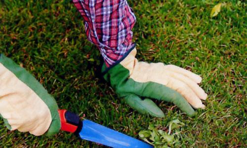 Malas hierbas sí que mueren...¿cómo acabar con ellas?
