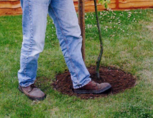 Llegó la hora de plantar