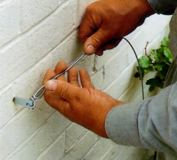 Ayuda a tu enredadera a encontrar su camino foto for Plantas trepadoras para muros