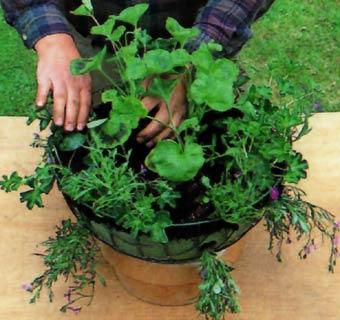 Cestas colgantes y jardineras, dos razones para presumir