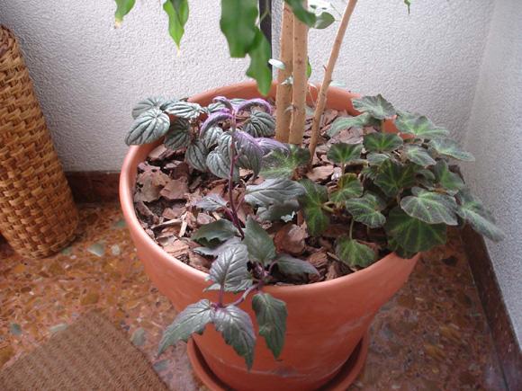 Alegra la imagen de tu casa con plantas de ensueño