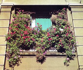 Porque el espacio sí importa, no se te ocurra plantar un pino en tu terraza